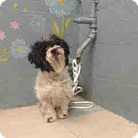 Adopt A Pet :: Wyatt - Simi Valley, CA