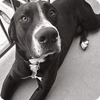 Adopt A Pet :: Poppy - Austin, TX