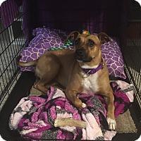 Adopt A Pet :: Chloe - Fredericksburg, VA