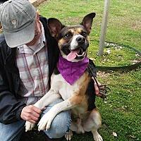 Adopt A Pet :: Clyde - Thomaston, GA