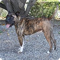 Adopt A Pet :: Gator - Santa Barbara, CA