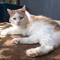 Adopt A Pet :: Sonny - Bedford, VA