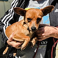 Adopt A Pet :: VICTORIA - Chico, CA