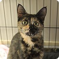 Adopt A Pet :: Emilia - Naperville, IL