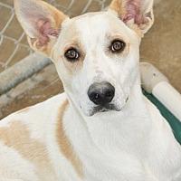 Adopt A Pet :: Judge - Mahwah, NJ