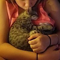 Adopt A Pet :: Memphis - ROSENBERG, TX