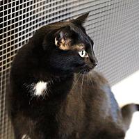 Adopt A Pet :: Minnie - Lincoln, NE