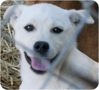 Husky Mix Puppy for adoption in Londonderry, New Hampshire - Lake