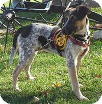 Bluetick Coonhound/Beagle Mix Dog for adoption in Fairfax, Virginia - Earl