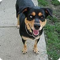 Adopt A Pet :: Rio - Cincinnati, OH