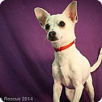 Adopt A Pet :: Sochi - Broomfield, CO