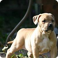 Adopt A Pet :: Cora - Oak Creek, WI