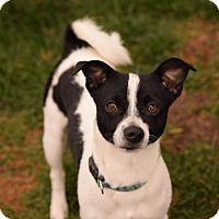 Adopt A Pet :: Bosco - Meridian, ID