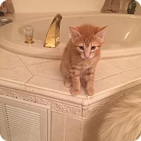 Adopt A Pet :: Leo - Jackson, NJ