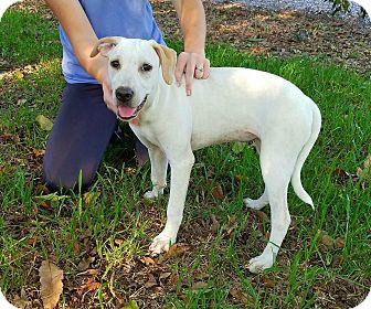 Labrador Retriever Mix Puppy for adoption in Matawan, New Jersey - Moxi
