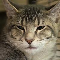 Adopt A Pet :: DE DE - Houston, TX