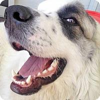 Adopt A Pet :: Lorelei in NJ - Beacon, NY