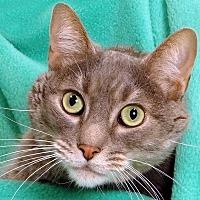 Adopt A Pet :: Xander - Renfrew, PA