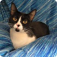 Adopt A Pet :: Lilly - Detroit, MI