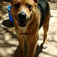 Adopt A Pet :: Izzy - Cedar Crest, NM