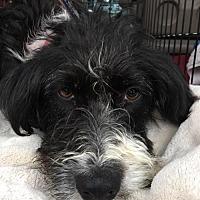 Adopt A Pet :: Betsy - Southeastern, PA