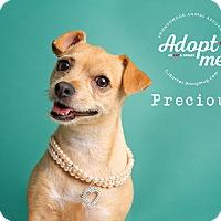 Adopt A Pet :: Precious - Friendswood, TX