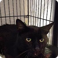 Adopt A Pet :: Cayleb - Brainardsville, NY