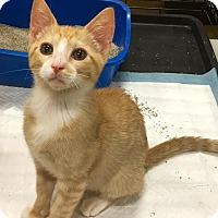 Adopt A Pet :: Runt - Smithtown, NY