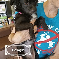 Adopt A Pet :: Cowgirl - Las Vegas, NV