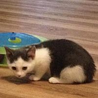 Adopt A Pet :: Sami - Phillipsburg, NJ