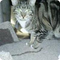Adopt A Pet :: Susan - Huntington, NY
