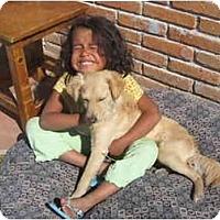 Adopt A Pet :: Rudy - Albuquerque, NM