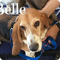 Adopt A Pet :: Belle and Delilah - Scottsdale, AZ