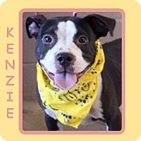 Adopt A Pet :: KENZIE - Dallas, NC