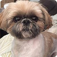 Adopt A Pet :: HULK - Los Angeles, CA