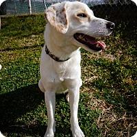 Adopt A Pet :: Star - Indian Trail, NC