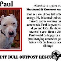 Adopt A Pet :: Paul - Lafayette, OR