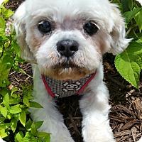 Adopt A Pet :: Betty - Bridgeton, MO