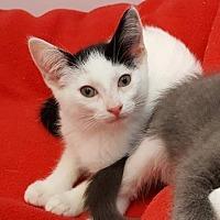 Adopt A Pet :: Faustine - Encinitas, CA