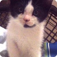 Adopt A Pet :: Fisher - Americus, GA