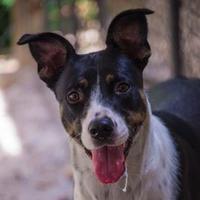 Border Collie Mix Dog for adoption in Decatur, Georgia - Bjork
