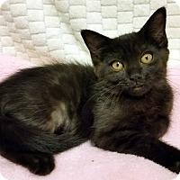 Adopt A Pet :: Lolly- RC Petsmart - Rancho Cucamonga, CA