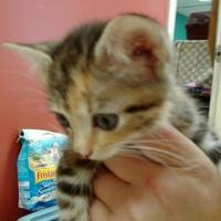 Adopt A Pet :: Tessa - Myrtle Beach, SC