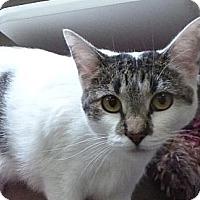 Adopt A Pet :: Little Dipper - St. Petersburg, FL