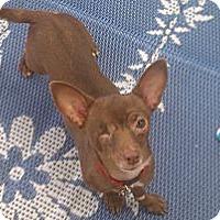 Adopt A Pet :: Cap'n Jack - scottsdale, AZ