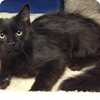 Adopt A Pet :: K-Kolb1-Peanut - Colorado Springs, CO