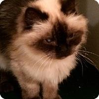 Adopt A Pet :: Sasha - Edmonton, AB