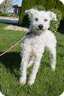 Mixed Breed (Small) Mix Dog for adoption in Meridian, Idaho - Joel