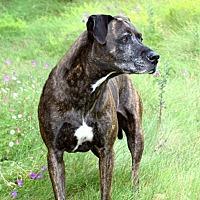 Adopt A Pet :: Kara - San Diego, CA