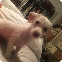 Adopt A Pet :: *COTTON* - Weatherford, TX